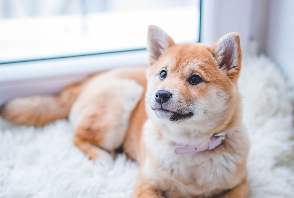Signs That Your Dog Might Be Suffering From a Heart Problem
